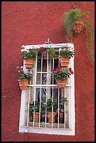 Window decorated with many potted plants. Guanajuato, Mexico (color)