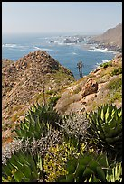 Succulents and rocky coastline. Baja California, Mexico ( color)