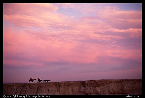 Men riding donkeys leading a camel at sunset, Judean Desert. West Bank, Occupied Territories (Israel) (color)