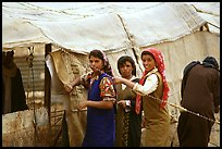 Bedouin women rearranging a tent's cover, Judean Desert. West Bank, Occupied Territories (Israel) ( color)