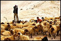 Man and girl feeding water to a hard of sheep, Judean Desert. West Bank, Occupied Territories (Israel)