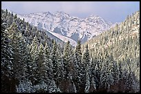 Trees and mountains in winter. Canadian Rockies