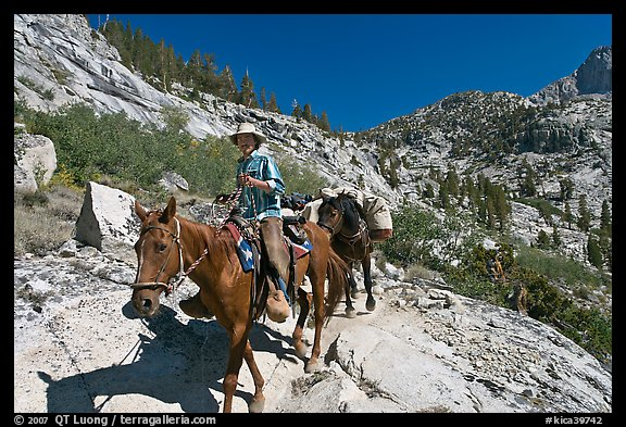 Man driving a pack of horses on trail, lower Dusy Basin. Kings Canyon National Park, California (color)