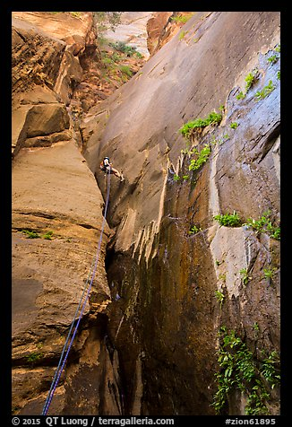 Canyoneer rappels along rock wall, Mystery Canyon. Zion National Park, Utah (color)
