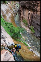 Canyoneer rappels into the Virgin River Narrows along Mystery Falls. Zion National Park, Utah ( color)