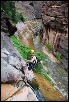 Man starting rappel into the Virgin River Narrows. Zion National Park, Utah ( color)