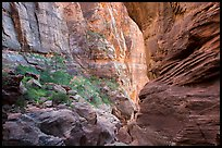 Hikers in Pine Creek Canyon. Zion National Park, Utah ( color)