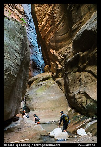 Hikers navigating narrows of Orderville Canyon. Zion National Park, Utah (color)
