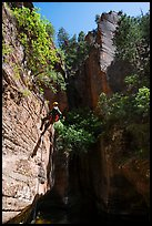 Canyoneer rappels in open section of Upper Left Fork. Zion National Park, Utah ( color)