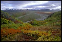 Tundra, braided rivers, Alaska Range at Polychrome Pass. Denali National Park, Alaska, USA.