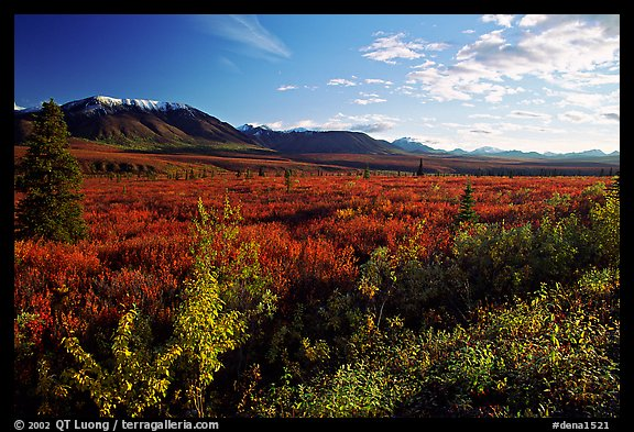 Alaska Range and tundra from near Savage River. Denali National Park (color)