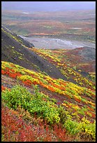 Tundra in autumn color and braided river in rainy weather. Denali National Park, Alaska, USA. (color)