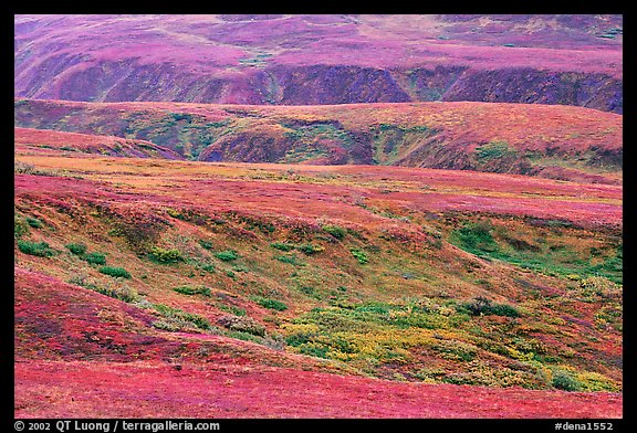 Tundra in fall colors and river cuts near Eielson. Denali National Park (color)