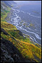 Aspen trees and braids of the Mc Kinley River near Eielson. Denali National Park, Alaska, USA. (color)