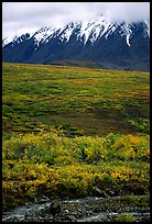 Grizzly bear and Alaska range. Denali National Park, Alaska, USA.