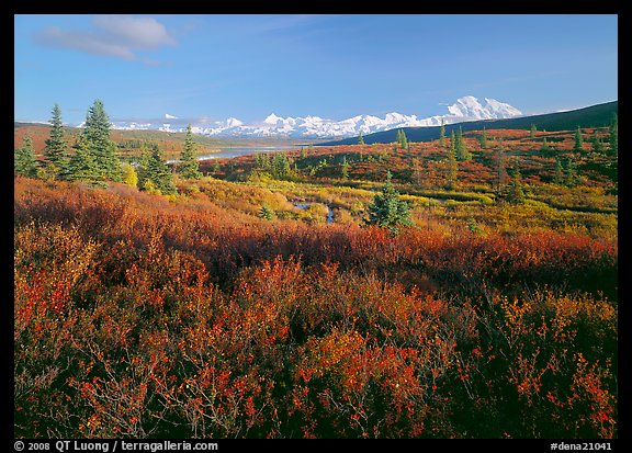Tundra in autumn colors and snowy mountains of Alaska Range. Denali  National Park (color)