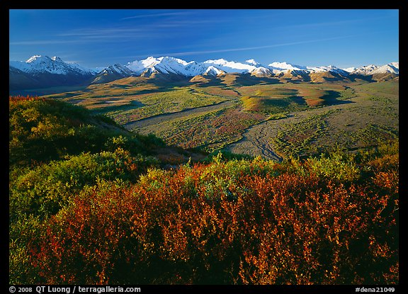 Alaska Range, braided rivers, and shrubs from Polychrome Pass, morning. Denali National Park (color)