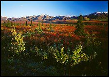 Tundra and mountain range near Savage River. Denali  National Park ( color)