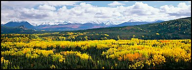 Mountain landscape with aspens in fall color. Denali National Park, Alaska, USA.