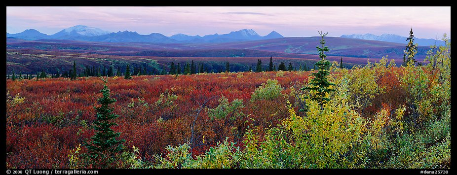 Tundra and Alaska range in autumn. Denali National Park (color)