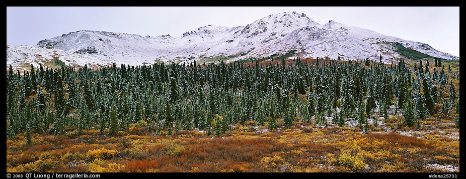 Boreal landscape with tundra, forest, and snowy mountains. Denali  National Park (color)