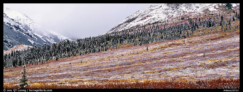 Autumn tundra landscape with fresh dusting of snow. Denali National Park (color)