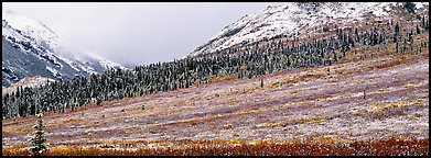 Autumn tundra landscape with fresh dusting of snow. Denali National Park (Panoramic color)