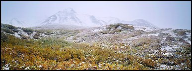 Misty mountain landscape with fresh now and autumn colors. Denali National Park (Panoramic color)