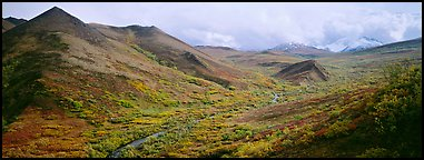 Tundra-covered foothills and valley. Denali National Park (Panoramic color)