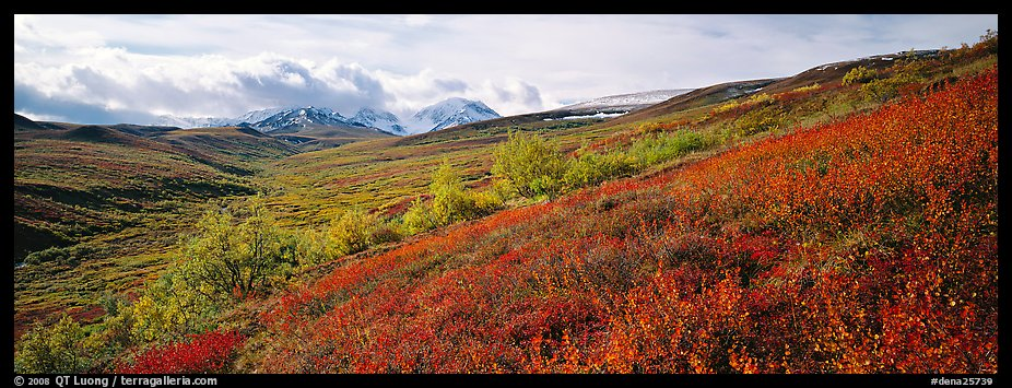 Northern mountain landscape in autumn. Denali National Park (color)