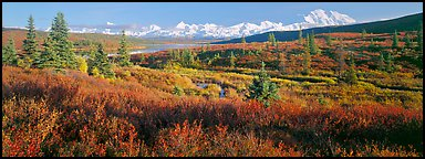Seasons passing on the tundra. Denali National Park (Panoramic color)
