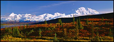 Tundra landscape with Mount McKinley. Denali National Park (Panoramic color)