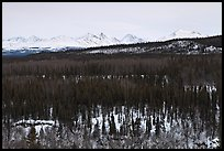 Bare forest in winter. Denali National Park ( color)