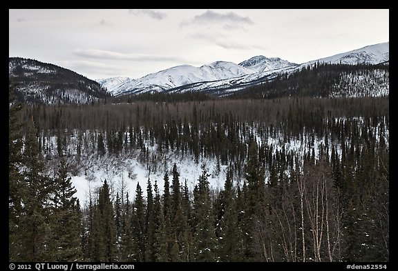 Riley Creek drainage and mountains in winter. Denali National Park (color)