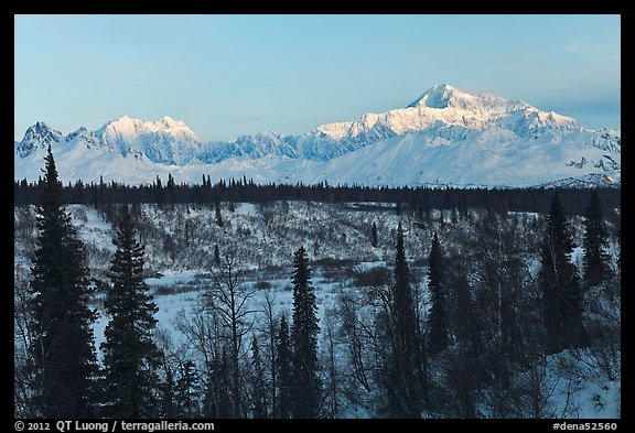 Alaska range peaks rising above forest at sunrise. Denali National Park, Alaska, USA.