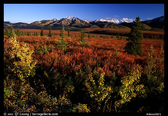 Tundra and mountain range near Savage River. Denali  National Park (color)