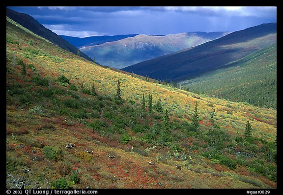 Arrigetch valley with caribou. Gates of the Arctic National Park (color)