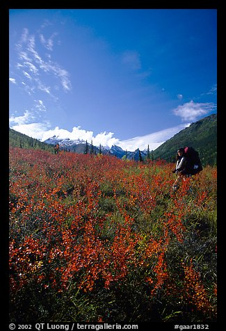 Backpacker in the tundra at the entrance of Arrigetch Creek. Gates of the Arctic National Park, Alaska (color)