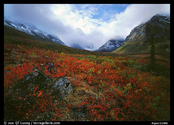 Arrigetch Peaks, tundra in fall colors, and clearing storm. Gates of the Arctic National Park (color)