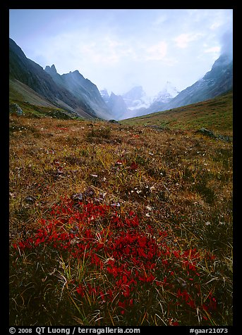 Low tundra in autum color and Arrigetch Peaks. Gates of the Arctic National Park (color)