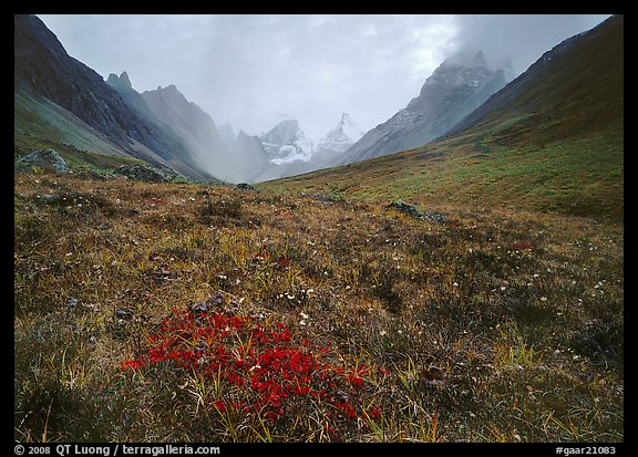 Tundra and Arrigetch Peaks. Gates of the Arctic National Park (color)