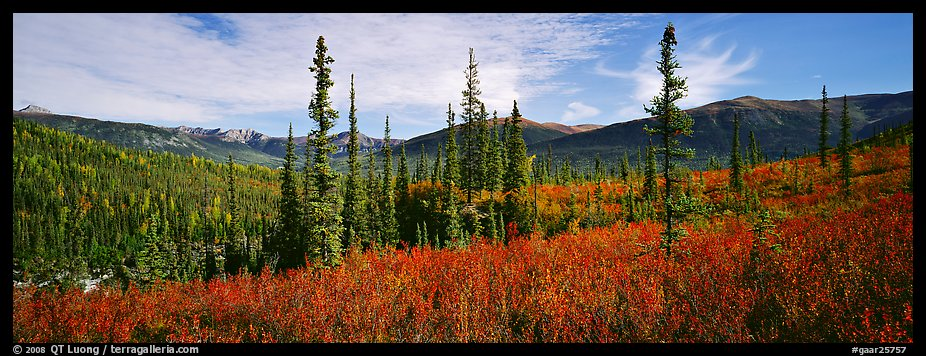 Mountain landscape with berry plants in fall colors, forest, and snow-dusted peaks. Gates of the Arctic National Park (color)