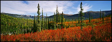 Mountain landscape with berry plants in fall colors, forest, and snow-dusted peaks. Gates of the Arctic National Park, Alaska, USA.