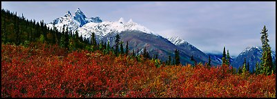 Taiga landscape in the fall. Gates of the Arctic National Park (Panoramic color)