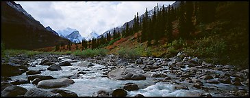 Taiga scenery with stream. Gates of the Arctic National Park (Panoramic color)