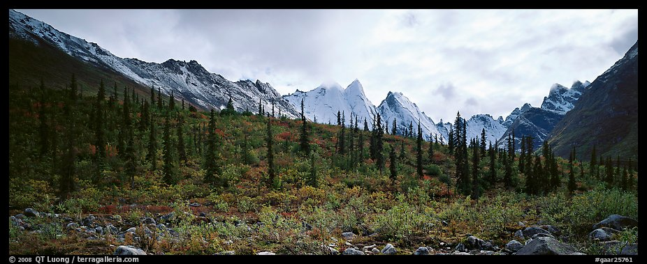 Taiga forest and peaks with fresh dusting of snow. Gates of the Arctic National Park (color)