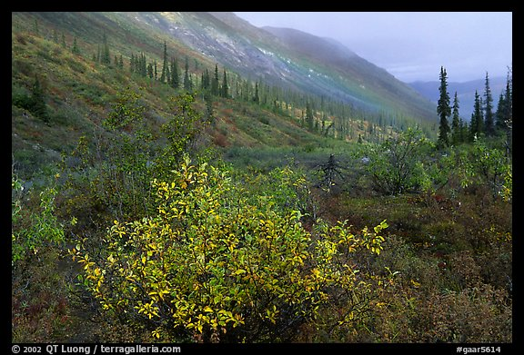 Arrigetch Valley in autumn. Gates of the Arctic National Park (color)