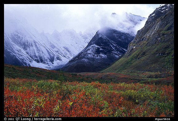 Tundra and Arrigetch Peaks partly hidden by clouds. Gates of the Arctic National Park (color)