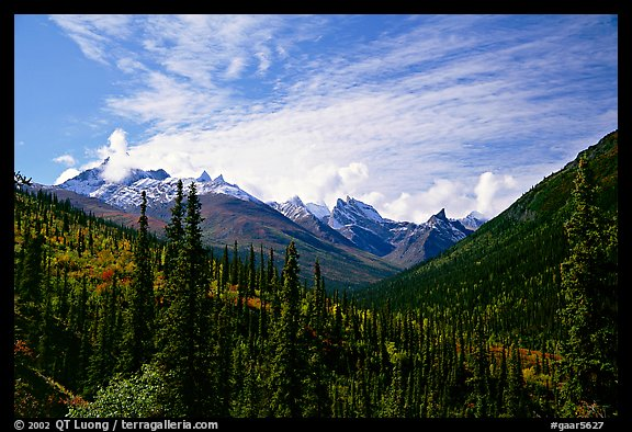 Arrigetch Peaks and spruce forest from Arrigetch Creek entrance, morning. Gates of the Arctic National Park (color)