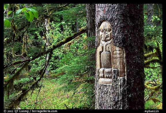 Tree carved by native Tlingit indians, Bartlett Cove. Glacier Bay National Park (color)